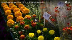 Giełda przy Tesco w Opolu 2017r. cz.7 - Kwiaty Sadzonki